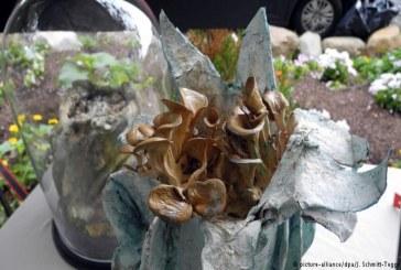 تماثيل فنية تنتج فطراً صالحاً للأكل من ابتكار فنان أمريكي